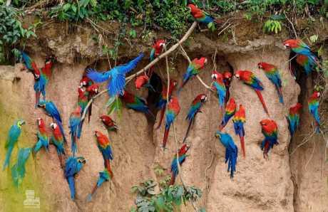 Reserva Nacional Tambopata 3D/2N
