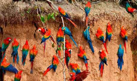 Manu National Park 4D/3N