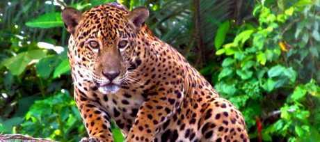Tambopata Wild 5D/4N